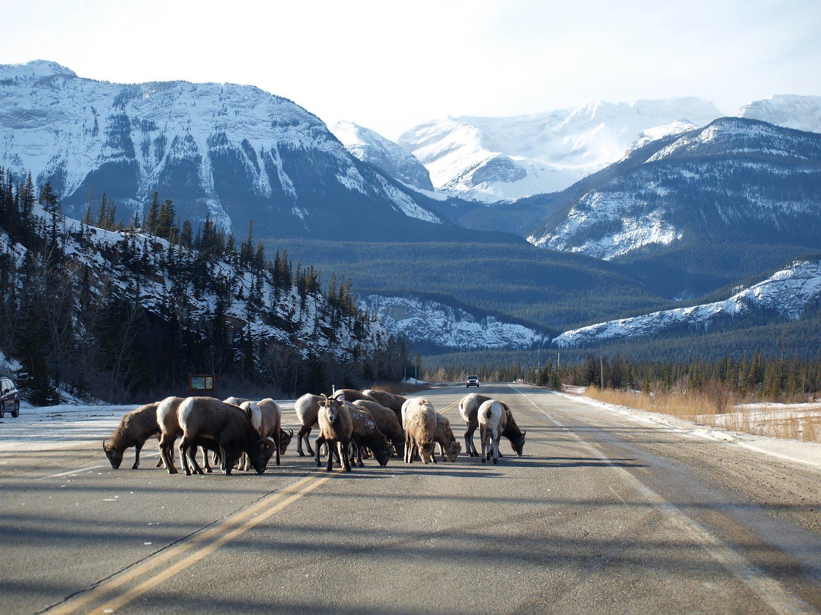 カナダ 国立公園